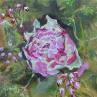 Garden Rose - Available