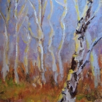 Sunlit-Birches -  Available