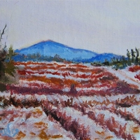 Winter-Berry-Fields-   Available