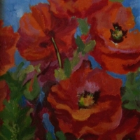 Poppies - Available